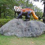 動物園の立体レッサーパンダ